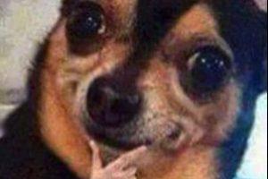 Este perrito ya era famoso, pero en Latinoamérica le pusieron la mano. Foto:Facebook. Imagen Por:
