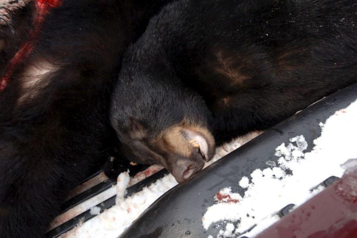 La estrella de heavy metal apareció con un rifle en mano sobre el cadáver de un oso pardo en 2014. Después de ver esto sus fans repudiaron el acto y fue criticado fuertemente en medios de comunicación. Foto:Getty Images. Imagen Por: