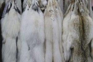 Participó en una campaña en 2009 luciendo prendas confeccionadas con pieles de animales, a pesar de que meses antes se había manifestado en contra del uso de pieles. Foto:Getty Images. Imagen Por:
