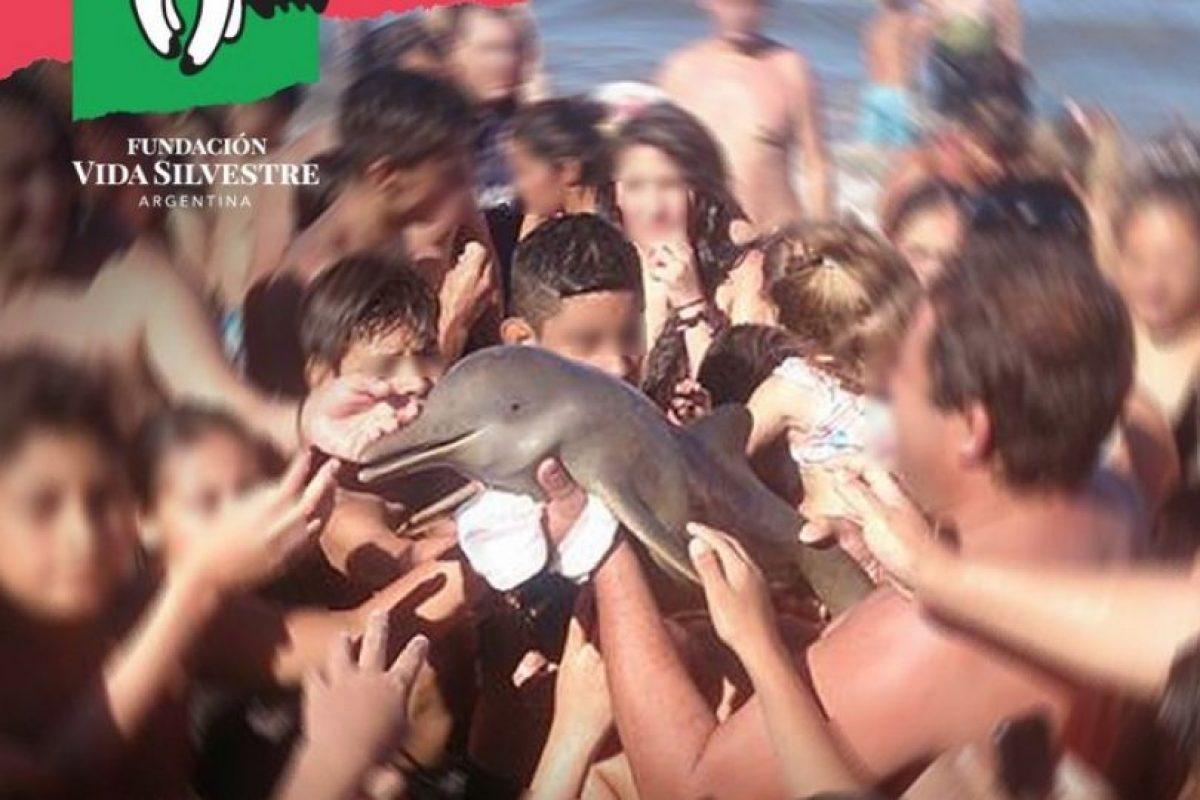La fundación local Vida Silvestre denunció el lamentable incidente Foto:Vía Twitter. Imagen Por:
