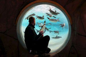 Su principal alimento sin peces Foto:Getty Images. Imagen Por: