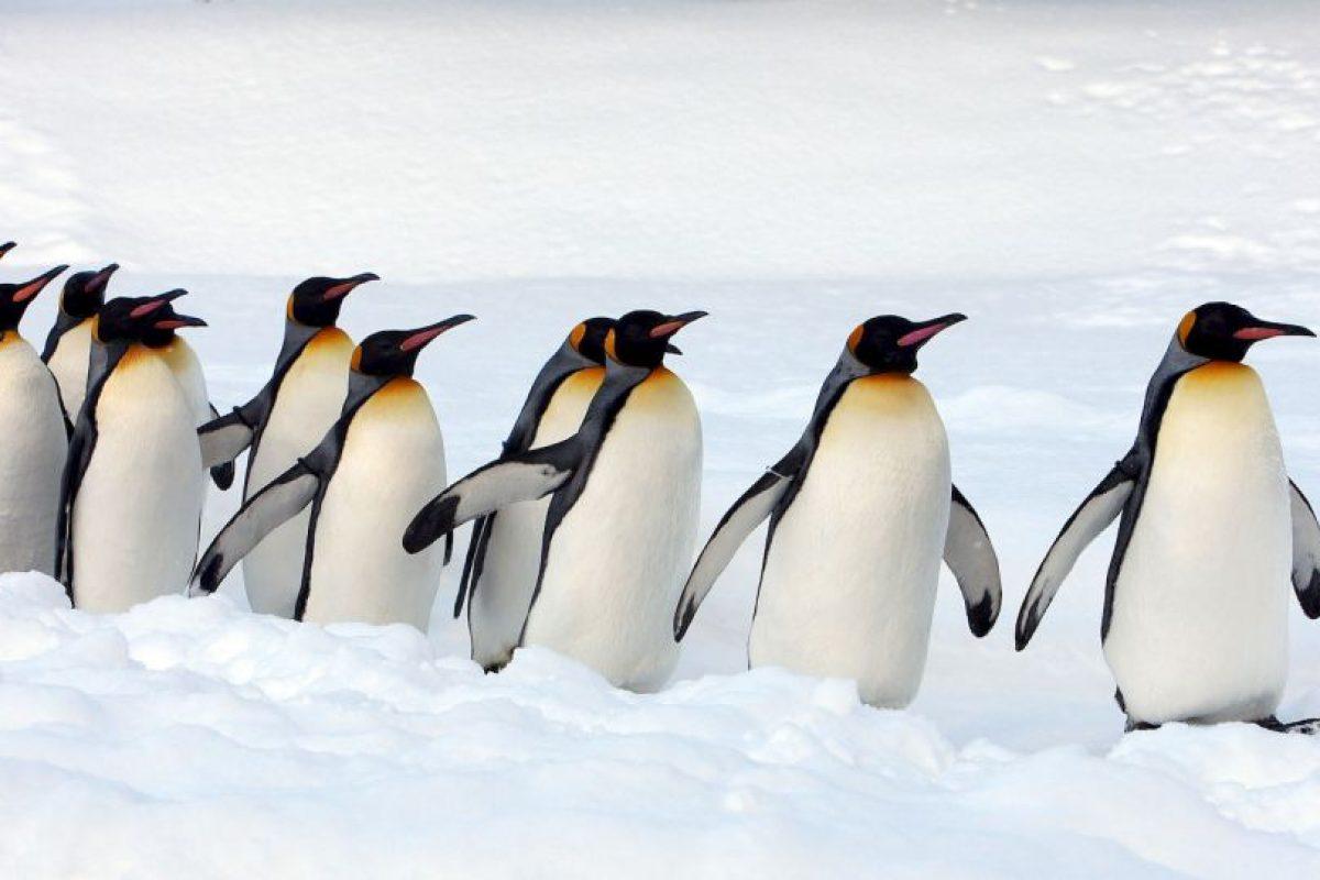 Viven en colonias de cientos o hasta miles de individuos Foto:Getty Images. Imagen Por: