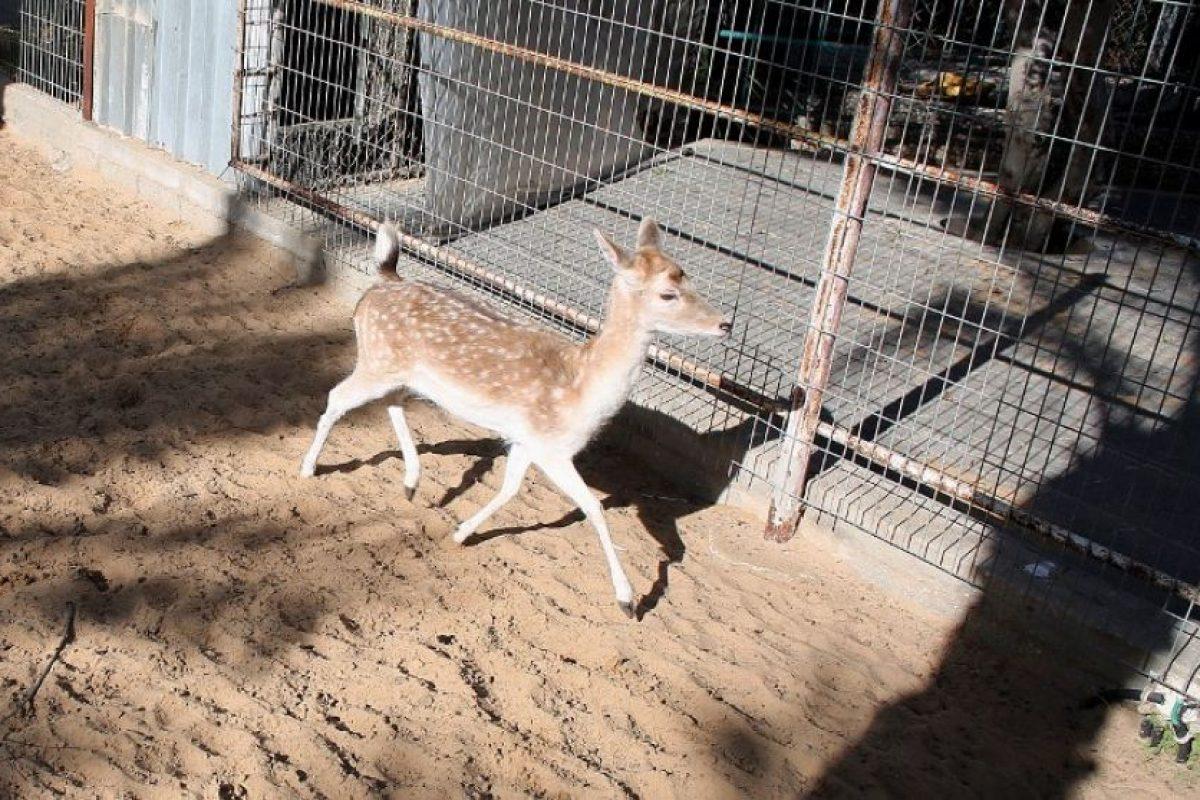 Uno de los zoológicos más tristes del mundo Foto:AFP. Imagen Por: