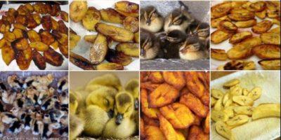 Mascotas y comida: El nuevo meme que la rompe en las redes sociales