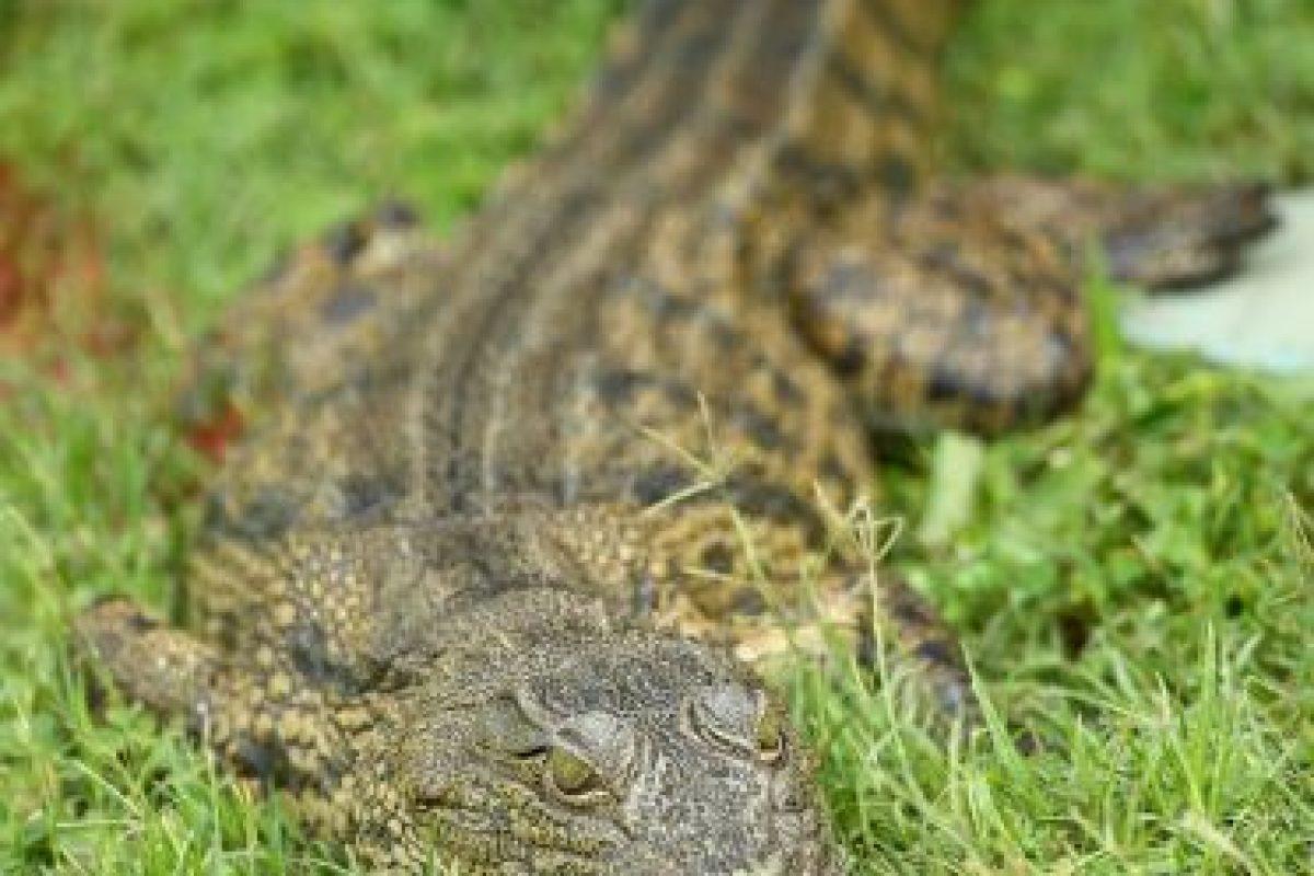 Estos animales llevan vidas bastante inactivas. Foto:Getty Images. Imagen Por: