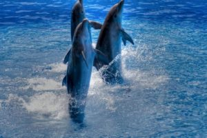 Delfines Foto:Wikimedia. Imagen Por: