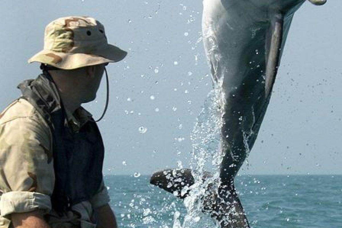 Cada delfín tiene un nombre único que lo diferencia de los otros Foto:Getty Images. Imagen Por: