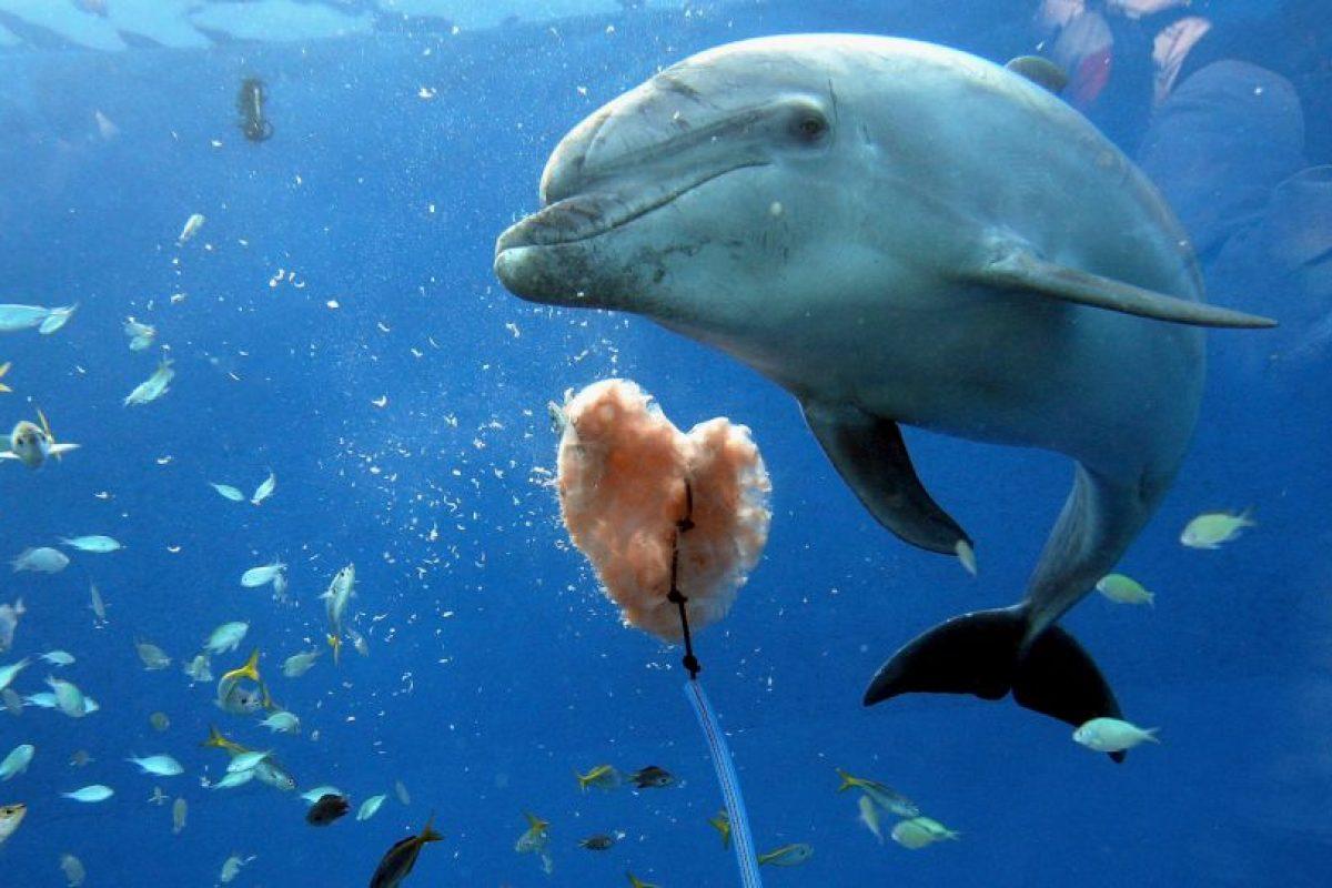 Su respiración no es un reflejo, como en los seres humanos, sino que necesitan respirar a voluntad Foto:Getty Images. Imagen Por:
