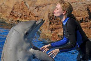 Se ha visto que, cuando uno delfín de un grupo está lastimado, los demás acudirán inmediatamente a ayudarle Foto:Getty Images. Imagen Por:
