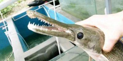 Pescador chino capturó particular criatura y esto fue lo que pasó