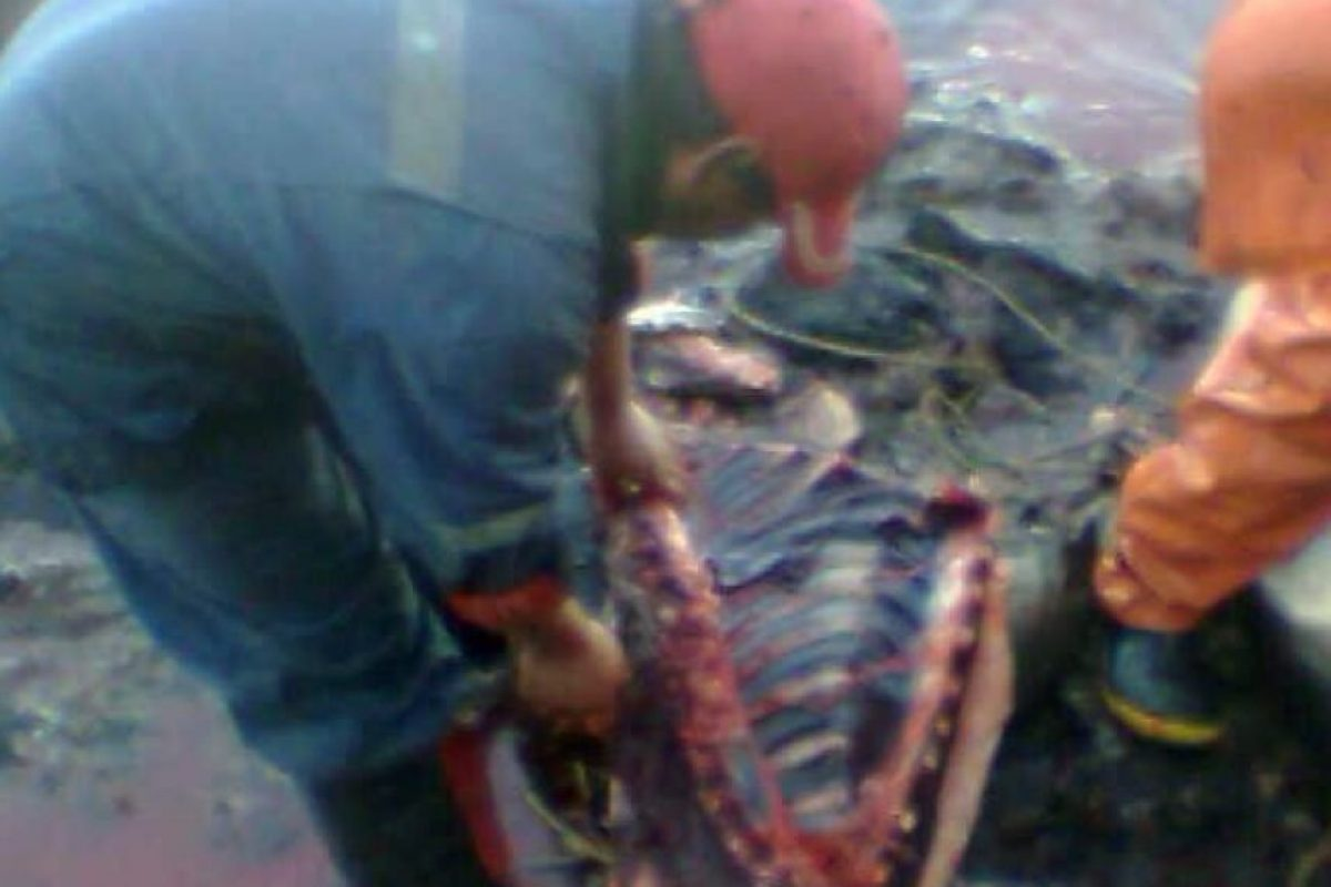 Foto:Orca Chile. Imagen Por: