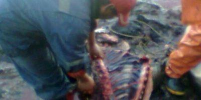 Pesca ilegal de Pingüinos y Lobos Marinos como carnada: ¿Cuál es el contexto detrás de esta denuncia?