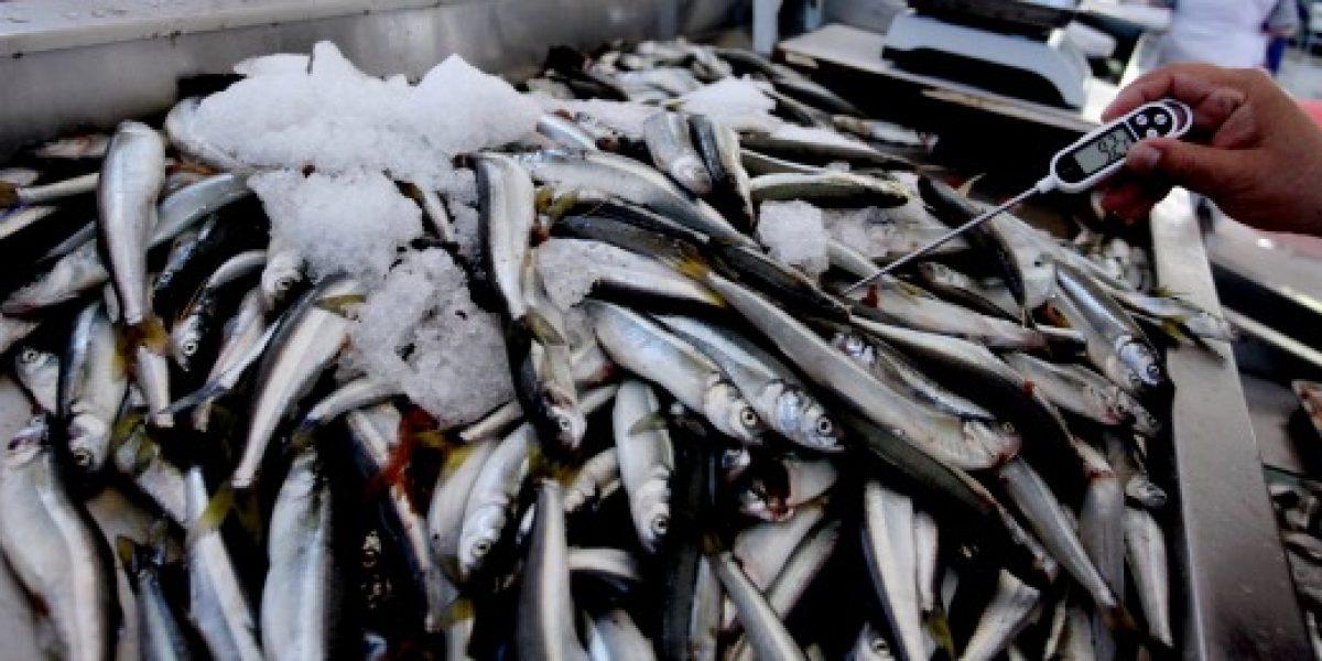 Sernapeca dio ultimatum a salmoneras para que retiren peces muertos