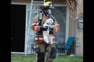 Este cachorro no ha sido el único con suerte. Foto:facebook.com/ProvidenceVFC29/?fref=photo. Imagen Por: