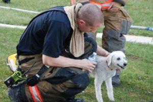 Otros animales que fueron rescatados Foto:facebook.com/ProvidenceVFC29/?fref=photo. Imagen Por: