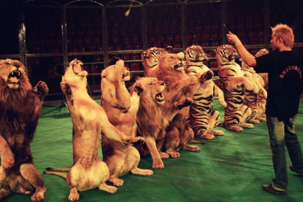 """Entre las víctimas se encuentra un león llamado """"José"""", el cual perdió su ojo por no recibir tratamiento médico. Foto:Getty Images. Imagen Por:"""