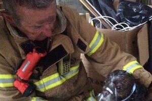 La brigada de Bomberos Metropolitana (MFB) salvó la vida de un perrito en peligro en Australia Foto:Vía facebook.com/Melbourne.MFB. Imagen Por:
