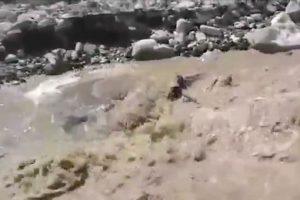 """El pequeño animal luchaba contra una corriente de agua que lo había arrastrado. Luego de ser rescatado, recibió el nombre de """"Príncipe"""" Foto:Vía Youtube.com/policiadecolombia. Imagen Por:"""
