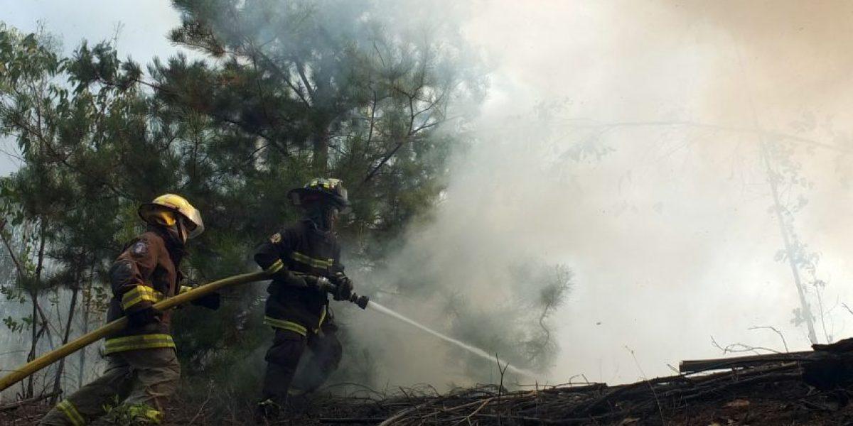 Alerta amarilla en provincias del Biobío y Concepción por incendios forestales