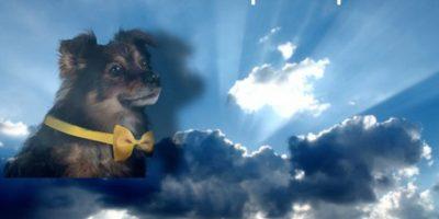 Muerte de perrito de Lipigas: con estos memes los tuiteros se despiden de