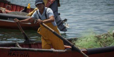 Presentan recurso de protección por trabajadores que retiran salmones muertos