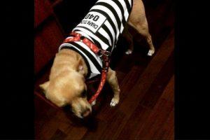 También venden disfraces para perros Foto:Twitter.com. Imagen Por: