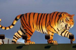 Datos que deben saber sobre los tigres Foto:Getty Images. Imagen Por:
