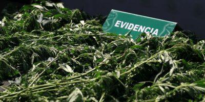 Carabineros respondió a llamado por robo y descubrió pequeño laboratorio de marihuana en casa