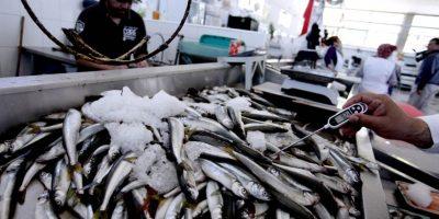 Seremi de Salud ha decomisado cinco toneladas de pescados y mariscos desde febrero