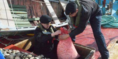 Armada decomisa 114 toneladas de mariscos previo a semana santa