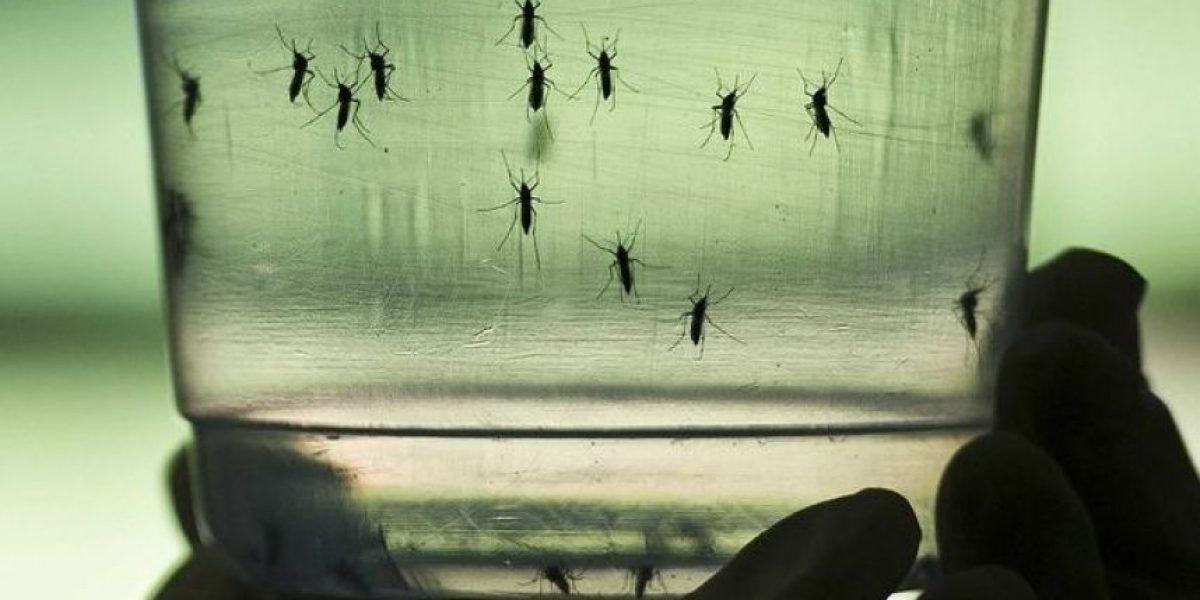 Minsal informa de tres nuevos casos de virus Zika en Chile y cifra se eleva a 10
