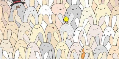 Desafío de Pascua: encuentra al huevito entre estos simpáticos conejos