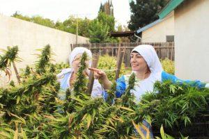 La planta contiene una sustancia química llamada delta‐9‐tetrahydrocannabinol (THC) Foto:facebook.com/sistersofthevalley. Imagen Por: