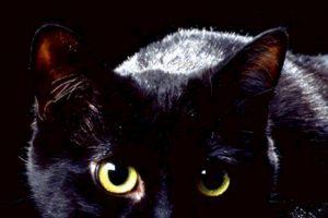 """9. Gatos negros: asociados al mal. Se dice que en los tiempos de la peste bubónica se """"vengaron"""" al dejar propagar las ratas que extendieron la enfermedad. Foto:vía Wikipedia. Imagen Por:"""