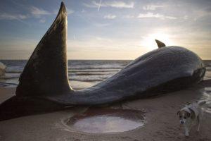 Foto:Getty Images. Imagen Por: