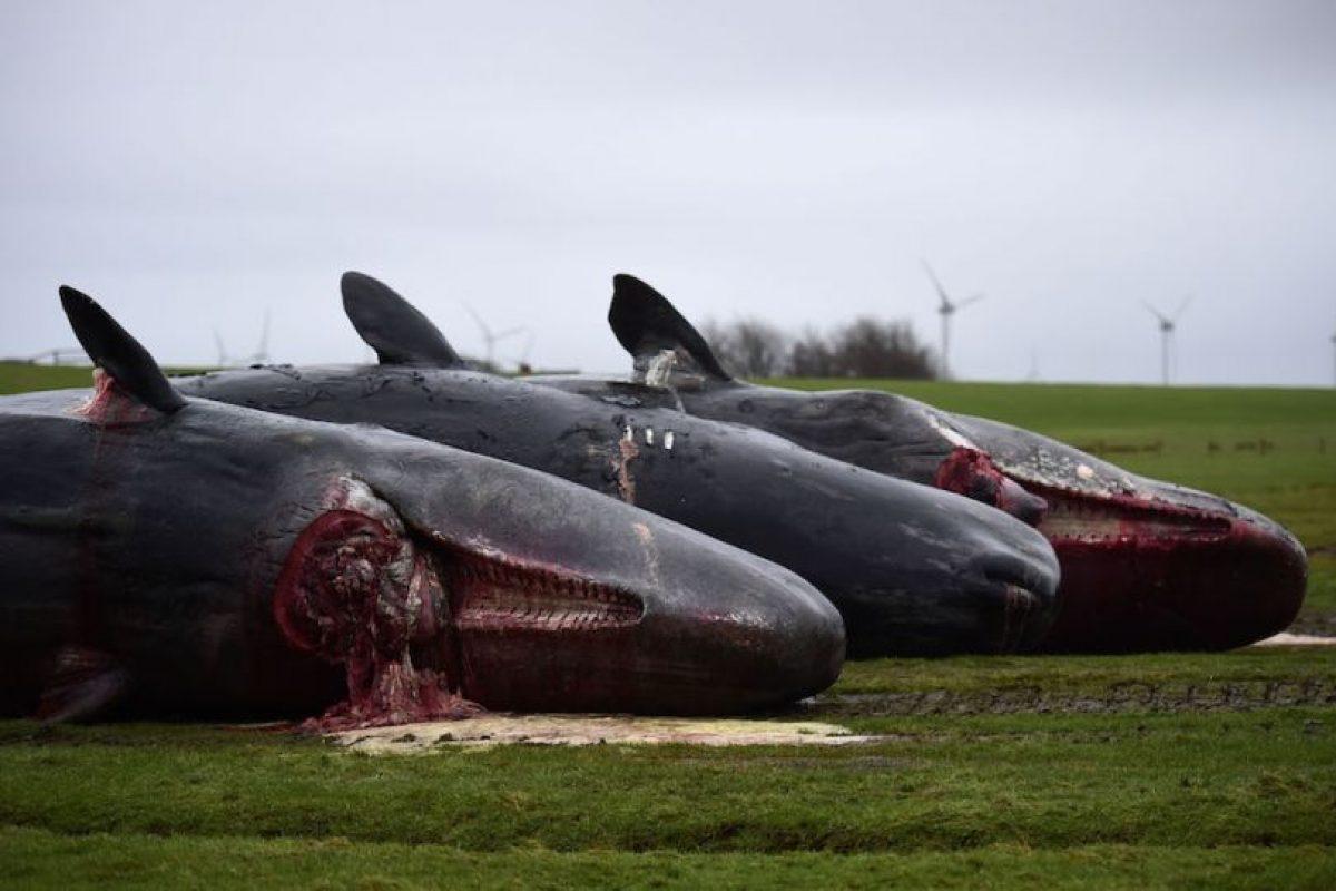 En su interior tenian desde redes de pescar hasta piezas de automóviles Foto:Getty Images. Imagen Por: