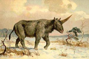"""Este es el Elasmotherium sibiricum o """"unicornio siberiano"""" Foto:Reproducción. Imagen Por:"""