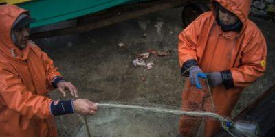 Informe del Gobierno: 18 especies marinas están agotadas o sobrexplotadas en Chile