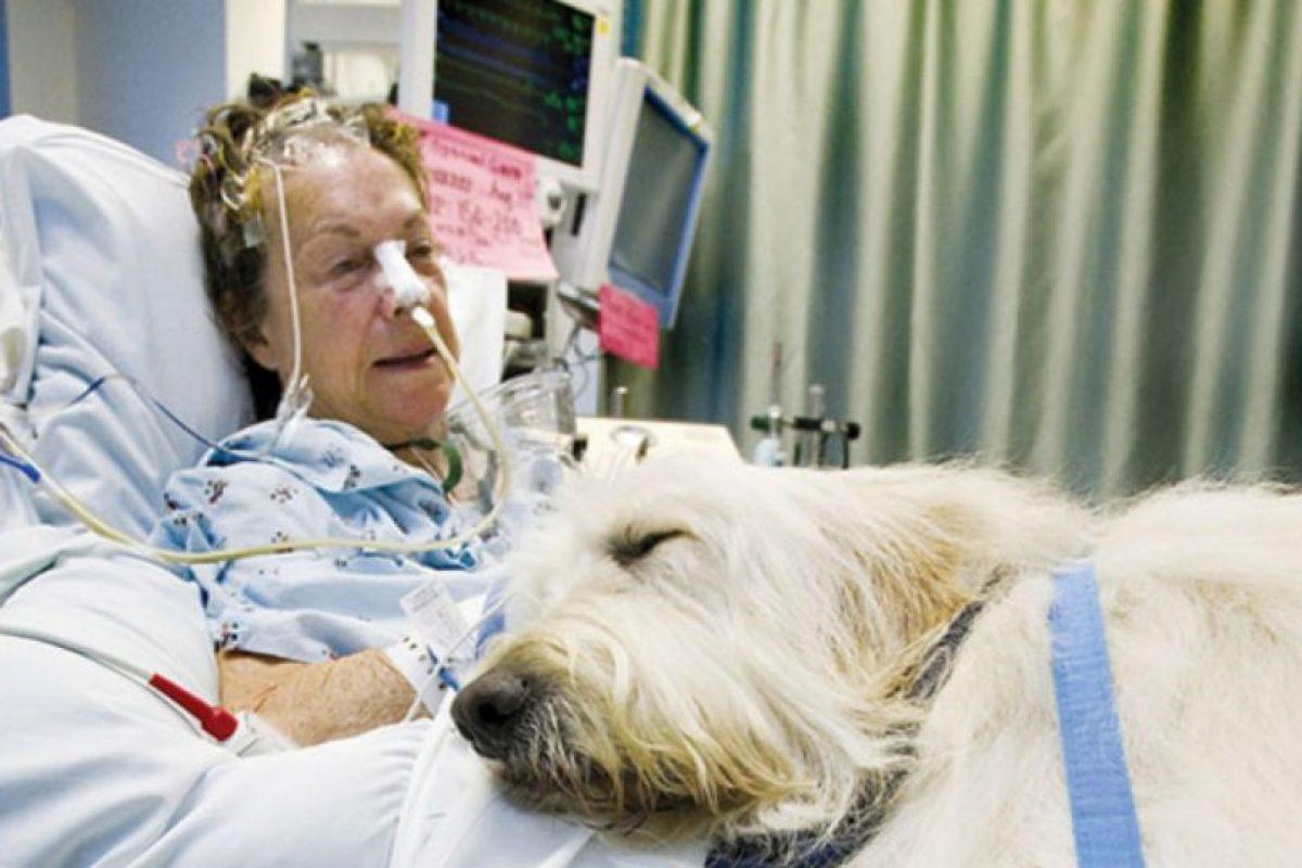 Estudios señalan que el contacto con los animales reduce el estrés de los pacientes. Foto:zacharyspawsforhealing.com/. Imagen Por: