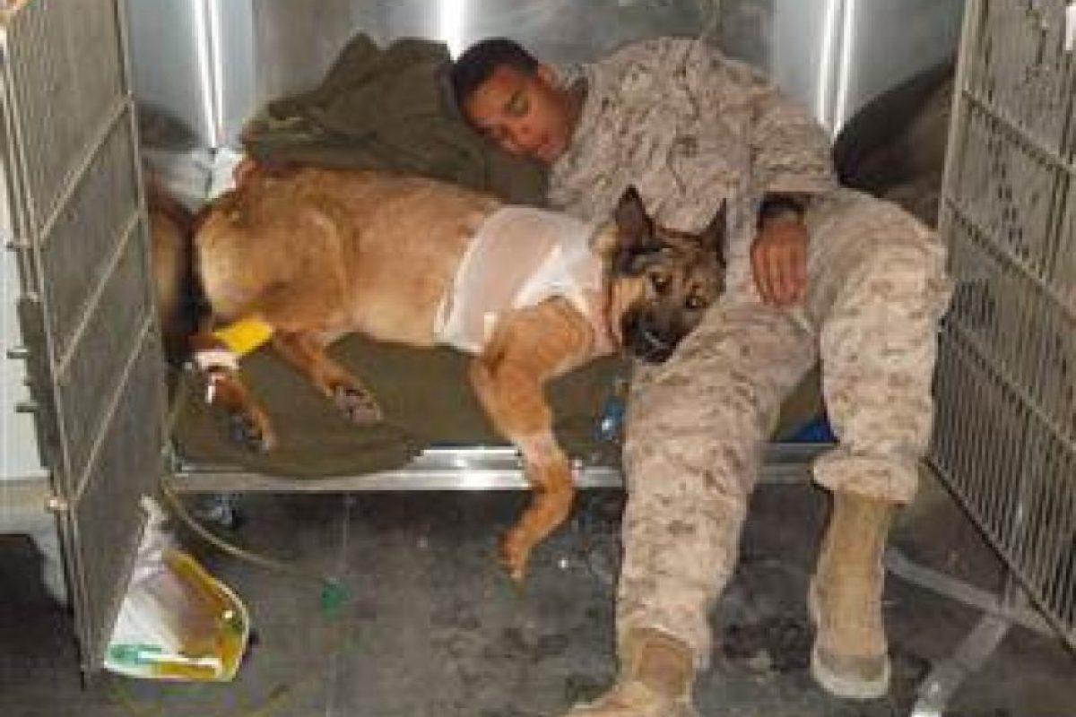 Las habilidades de Lucca como perro de búsqueda protegió las vidas de miles de tropas aliadas. Foto:Vía pdsa.org.uk. Imagen Por: