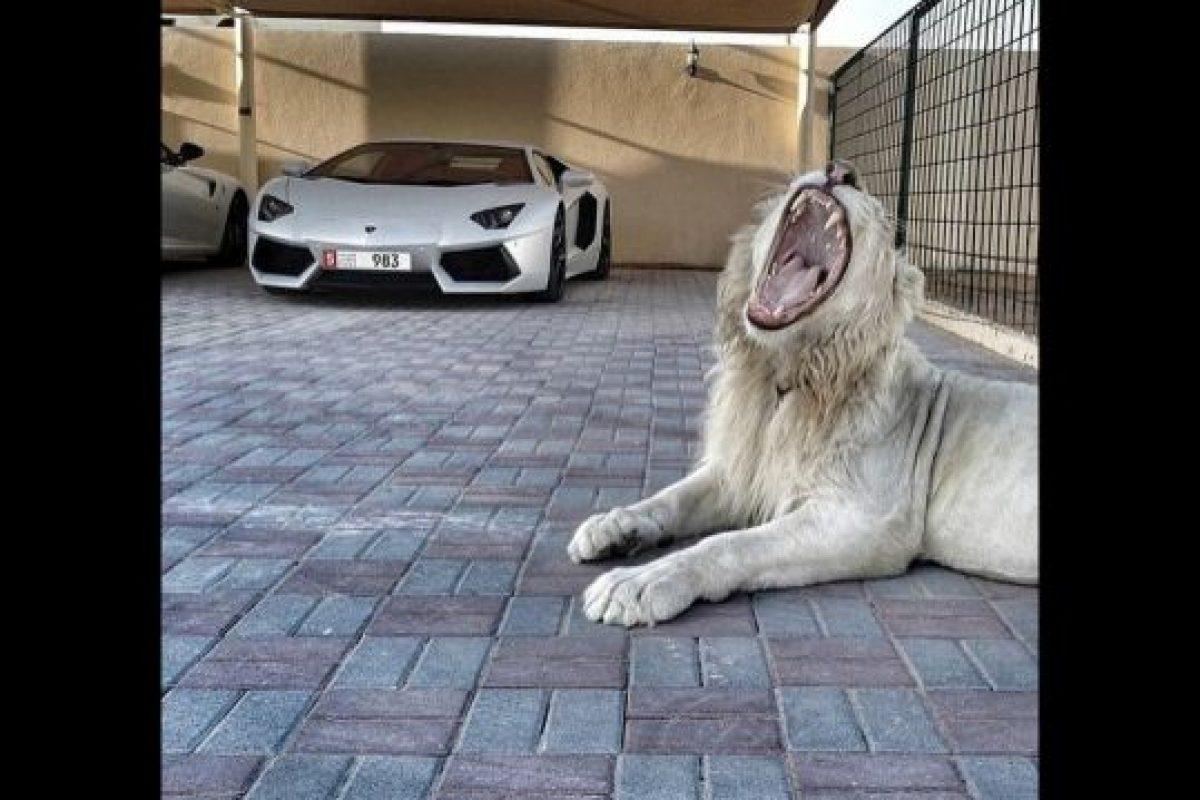 La posesión de animales exóticos Foto:instagram.com/richkidslondon/. Imagen Por: