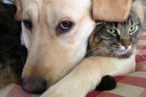 Los abrazos son lo mejor para demostrar su amor. Foto:Pinterest. Imagen Por: