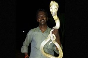 Es famoso por rescatar a grandes serpientes en su país. Foto:vía Facebook. Imagen Por: