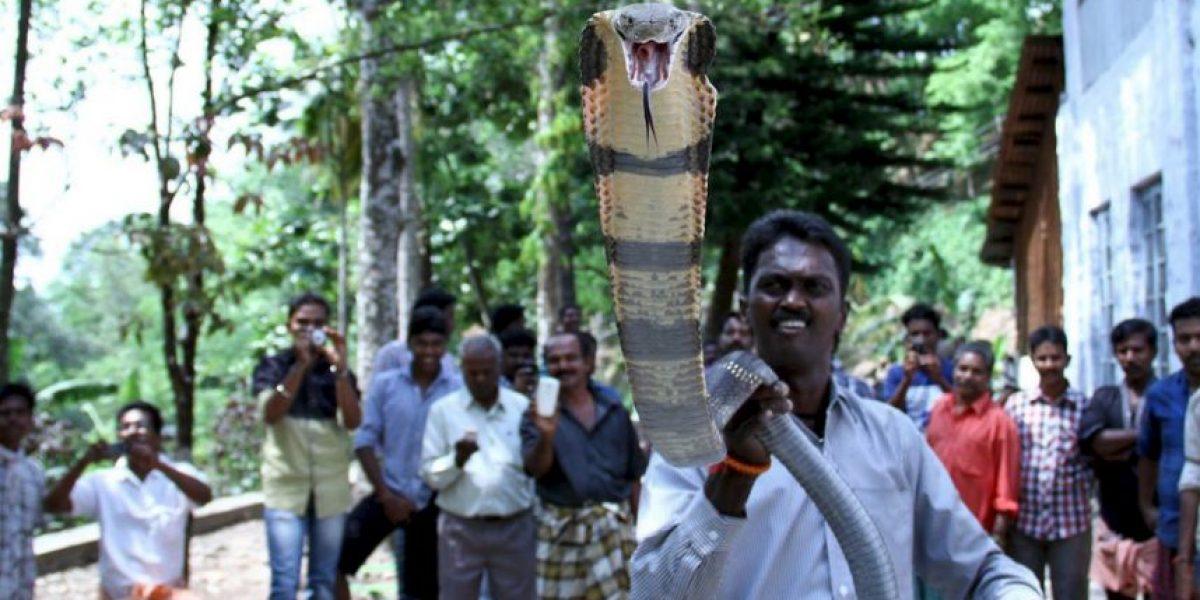 Cantante muere en pleno escenario luego de ser mordida por cobra