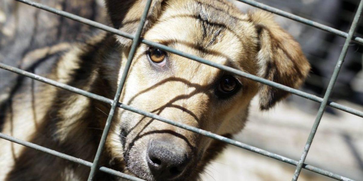 Calama: perro mordió a sujeto que golpeaba a su madre en plena calle