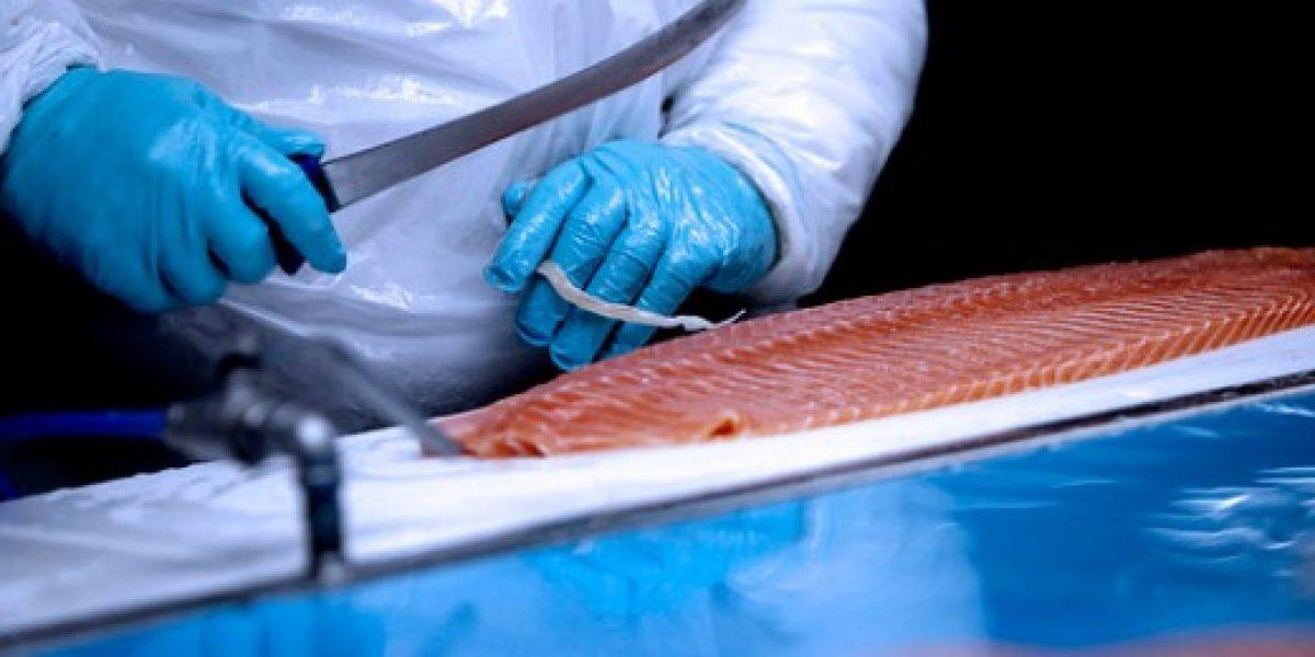 Productora de salmones anuncia 500 despidos debido a consecuencias de algas nocivas