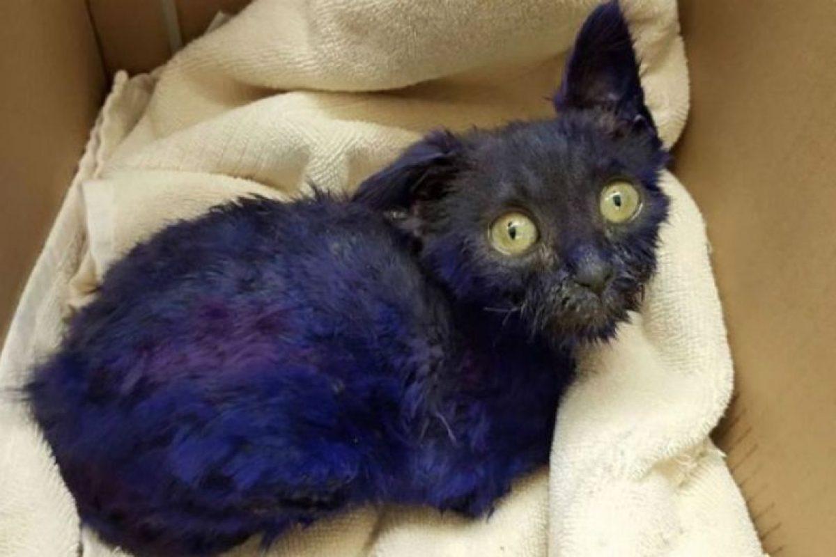 La fundación Nines Lives ayudó a este gatito luego de sospechar que fuera utilizado como cebo de peleas de perros. Foto:facebook.com/NineLivesFoundation. Imagen Por: