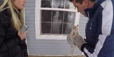 Video: Familia revive a un gato que se había congelado