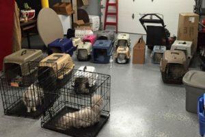Una mujer que se dedicaba a vender gatos mantenía dentro de una habitación 17 gatos en condiciones horribles. Foto:facebook.com/josephslegacyrescue. Imagen Por: