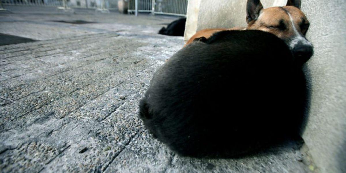 Denuncian casos de abusos sexuales contra perros en pleno centro de Valparaíso